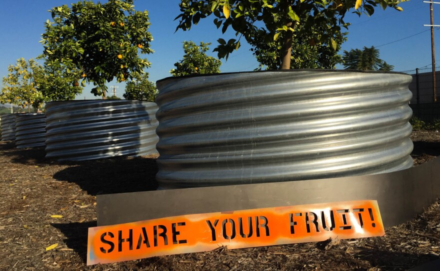 One of Fallen Fruit's public art installations — a fruit tree in a planter at the Los Angeles State Historic Park.