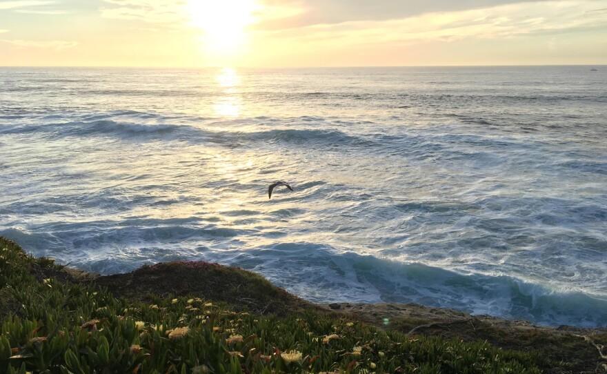 A pelican flies off the La Jolla coast, April 26, 2017.