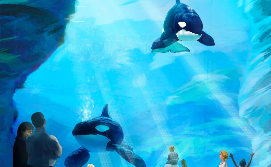 Artist rendering of the underwater view for the planned expansion of SeaWorld's killer whale habitat.
