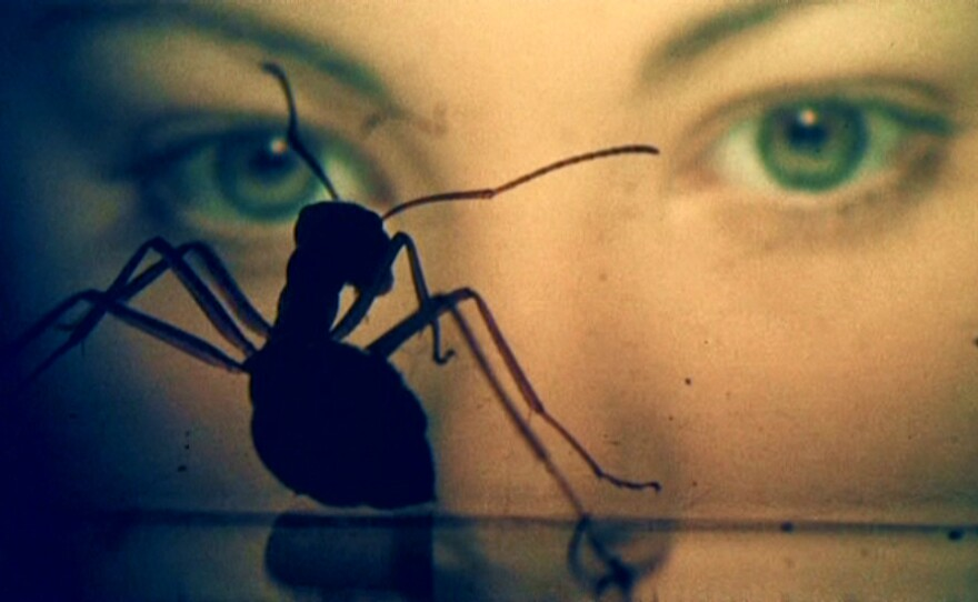 """Entomologist Michael Wall talks about the ants that threaten humanity in the movie """"Phase IV."""""""