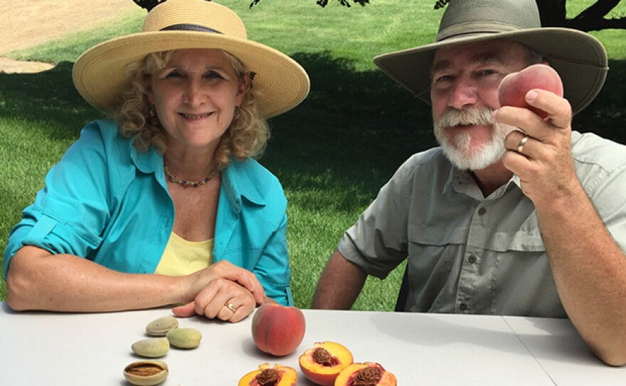 Host Nan Sterman and Tom Spellman from Dave Wilson Nursery discuss breeding fruit trees.