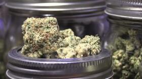 A marijuana bud on display at Hidden Leaf Collective, May 28, 2021.