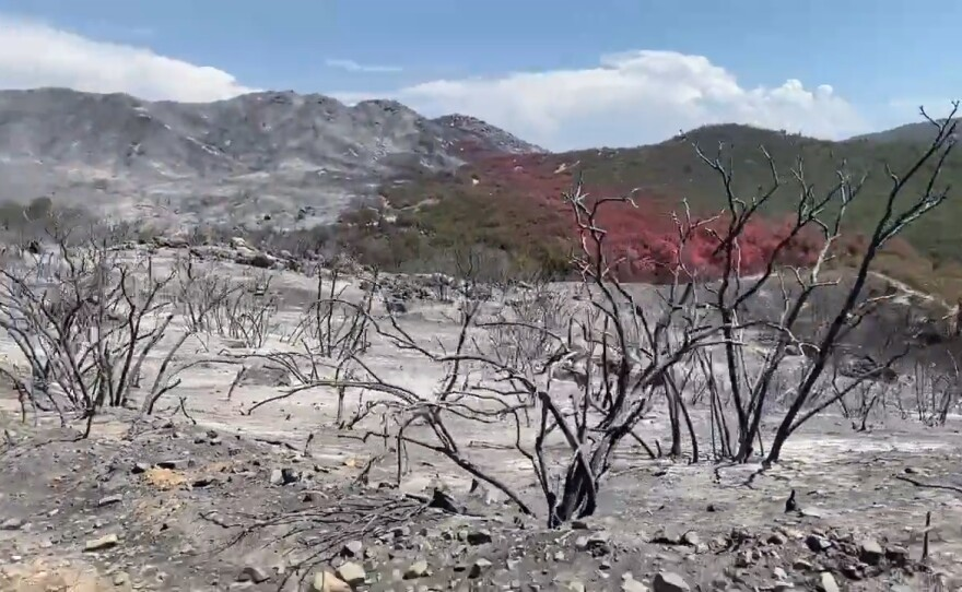 The charred hillside in the Cleveland National Forest from the Chaparral Fire, Aug. 30, 20021.