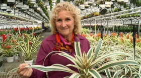 Host Nan Sterman (pictured) talks with experts, breeders, and collectors who share their best tips and secrets for growing bromeliads in our home gardens.