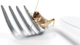 NOVA_edible_insects_img.jpg