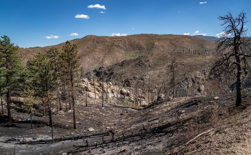 The Poudre River's watershed has now experienced two large-scale wildfires in the last decade. This undated photo shows the watershed after its latest wildfire.