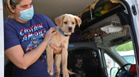 A dog rescued from Texas at Helen Woodward Animal Center in Rancho Santa Fe, Calif. Feb. 24, 2021.