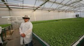 Carlos Fisher, co-owner of Sierra Seed Company, inside one of his greenhouses in Imuris, Sonora, Mexico.