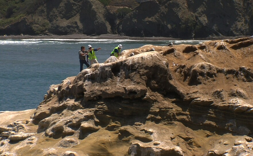 Workers from Blue Eagle Distribution spray the bluffs in La Jolla Cove, Dec. 15, 2013.