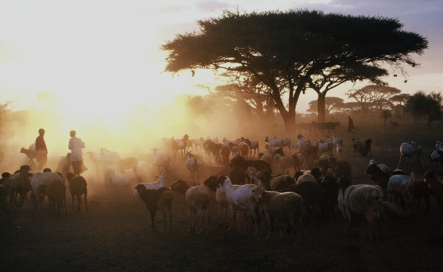 This photograph from Oct. 15, 2007, shows a Maasai herd on the Maasai Mara National Reserve in Kenya.