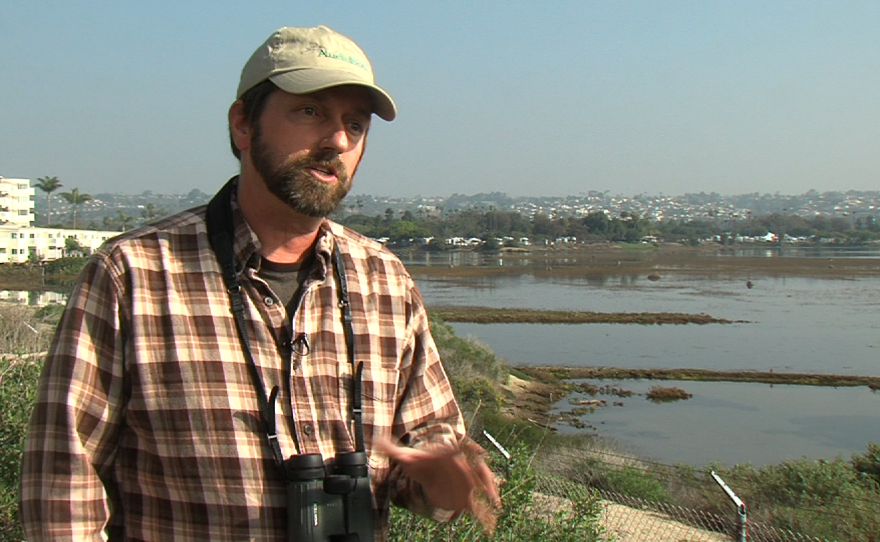 Chris Redfern, executive director of the San Diego Audubon Society, talks about the threat of climate change to the long-billed curlew at the Kendall Frost Marsh in Mission Bay, Jan. 21, 2015.