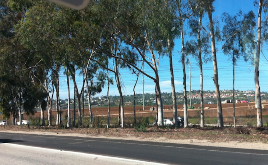 The strawberry fields east of Interstate Five in Carlsbad, where the proposed Agua Hedionda 85/15 Project would be built, Aug. 5, 2015