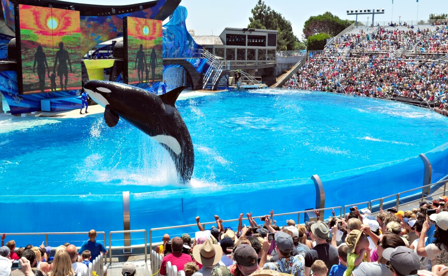 Shamu, the star of SeaWorld San Diego's One Ocean show, performs in this undated photo.