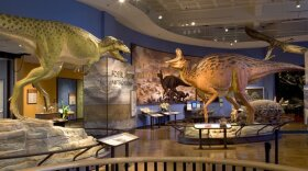 """The San Diego Natural History Museum's """"Fossil Mysteries"""" exhibit is shown in this undated photo."""