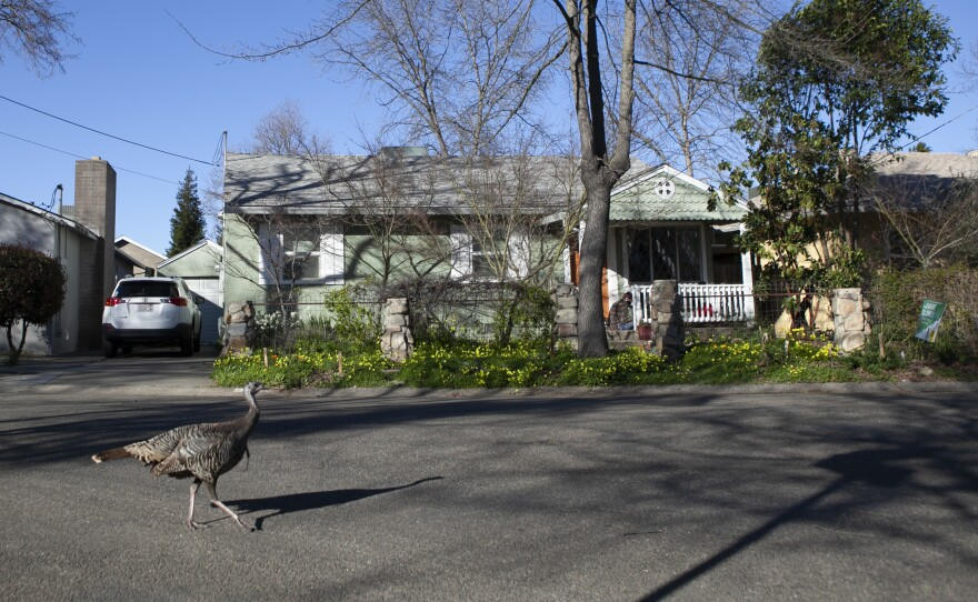 Sacramento's Elmhurst neighborhood is comprised of mostly single-family homes. The City Council has voted on a draft plan to allow fourplexes in all residential areas.