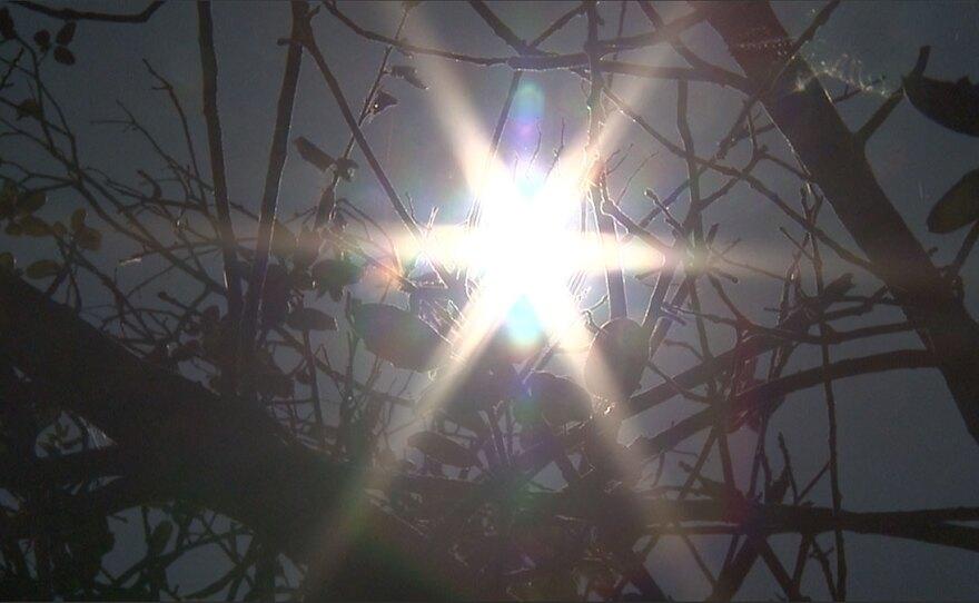 Sun shining through the trees, July 5, 2018