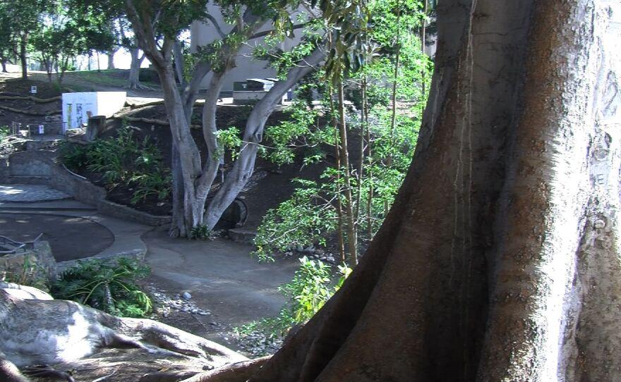 Zorro Garden, also known as the Butterfly Garden, is nestled between the Reuben H. Fleet Science Center and Casa De Balboa building, Feb. 17, 2015.