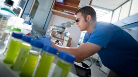 Scientists at UC San Diego are among the workers in the region transforming algae into transportation fuels.