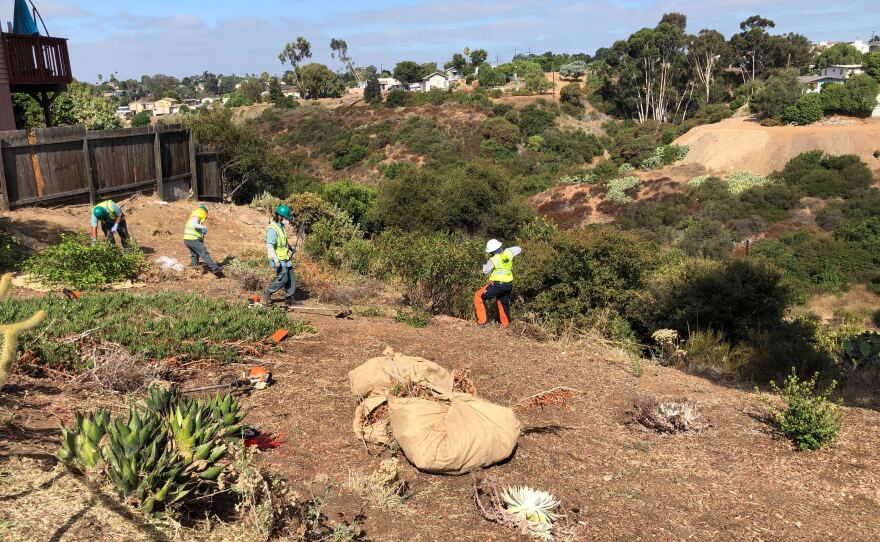 Urban Corps workers clearing brush at the edge of Mazanita Canyon in San Diego on Aug. 6, 2020.