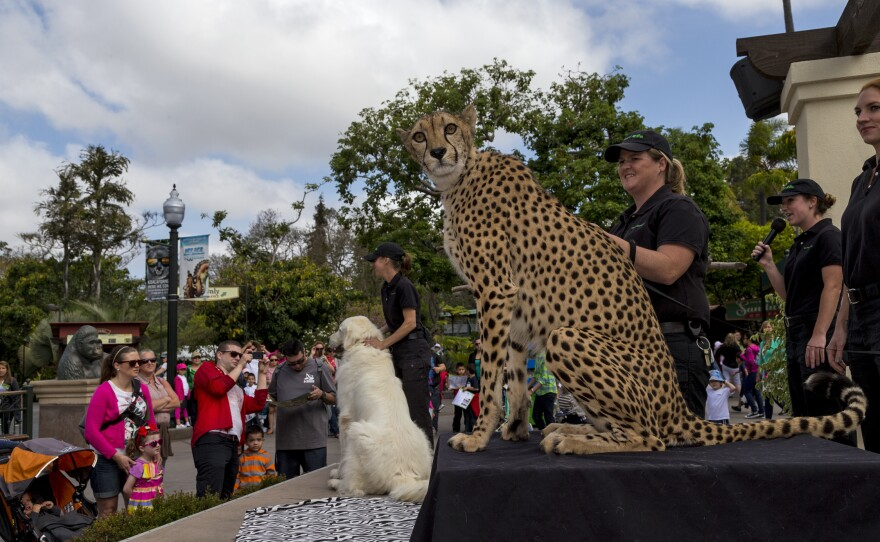 This undated photo shows visitors watching during a stage animal encounter at San Diego Zoo.