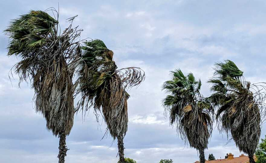Blustery winds in San Diego as shown on Jan. 20, 2021
