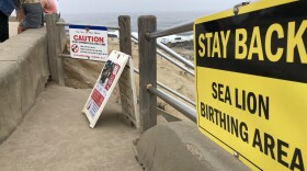 San Diego recently added signs to encourage people to keep their distance from the La Jolla sea lions on Aug. 4, 2021.