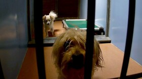 Dogs in their pen at the San Diego County Animal Shelter, April 13, 2017.