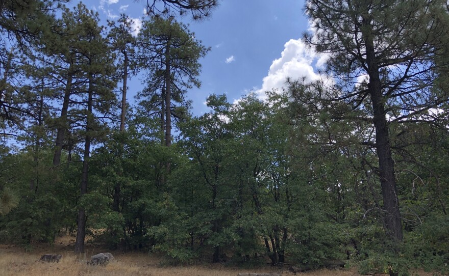 Dry conditions in the Cleveland National Forest, prompt federal officials to close the forest to the public on Aug. 31, 2021.