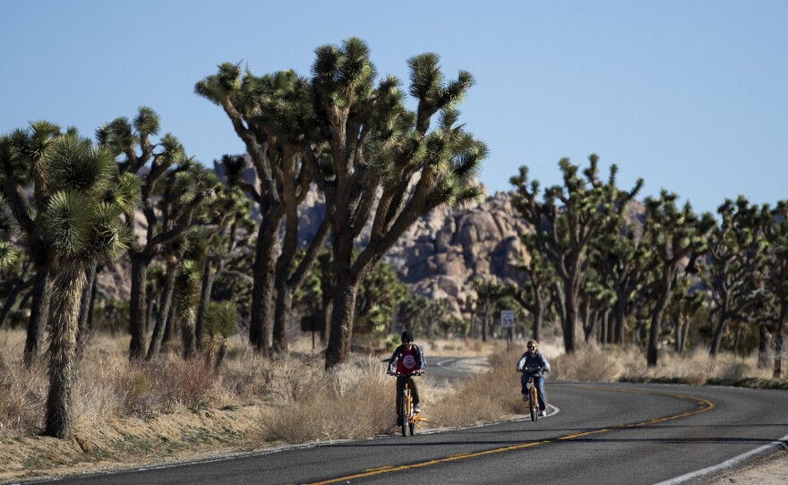 In this Jan. 10, 2019, file photo, two visitors ride their bikes along the road at Joshua Tree National Park in Southern California's Mojave Desert.