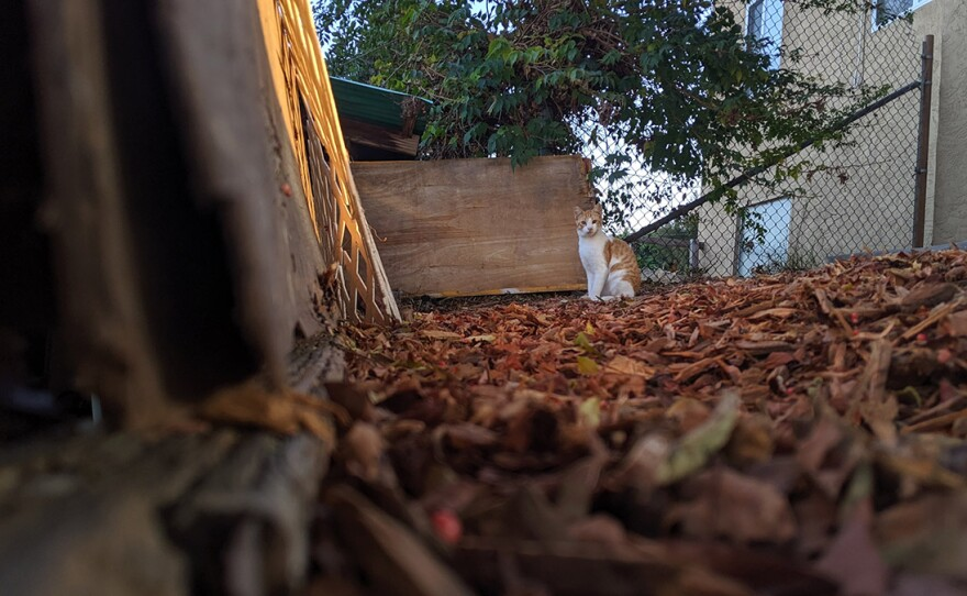 A cat peeks through the trees in Paradise Hills, Nov. 5, 2019.