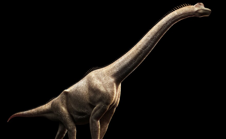 Brachiosaurus dinosaur, a relative of the newly discovered species, seen in computer artwork.