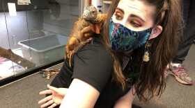 Shelly Oneida allows her reptile friend to perch on her shoulder at the Escondido EcoVivarium on Apr. 8, 2021.