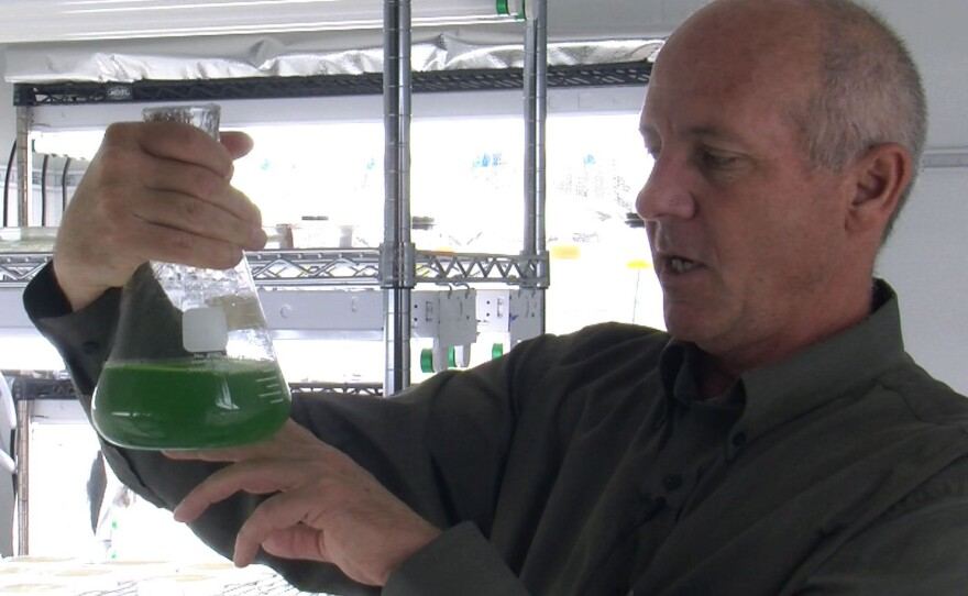 Stephen Mayfield in his lab on July 18, 2011. Mayfield is one of the scientists in San Diego working on turning algae into fuel.