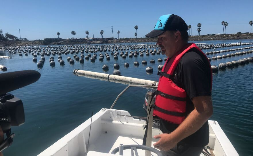 Matt Steinke prepares to lift up a buoy that marks the location of a stack of trays full of growing oysters on Aug. 28, 2019.