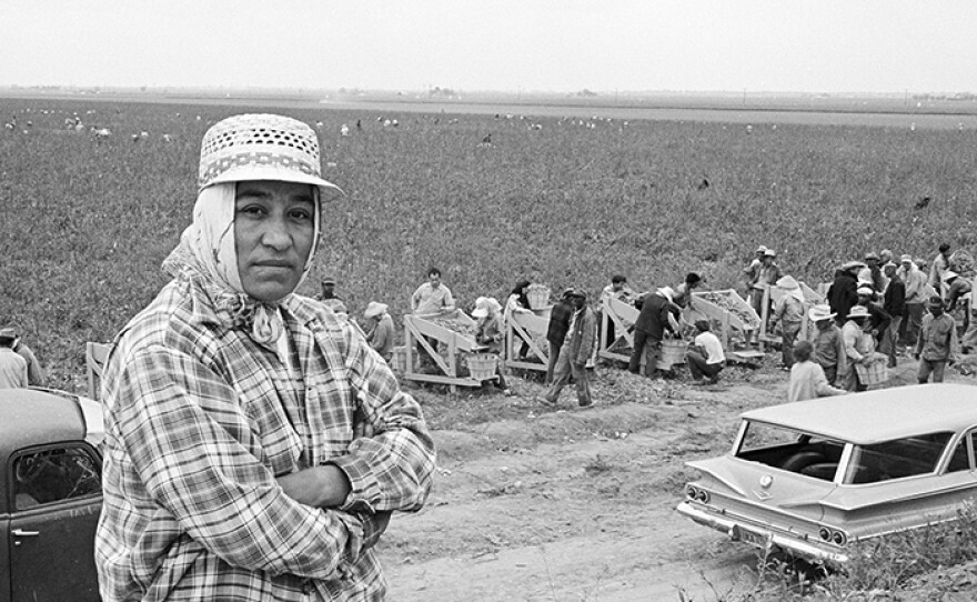 Migrant mother Maria Moreno became the first farmworker woman in America to be hired as a union organizer. With peapickers harvesting in the background, Maria wears the typical dress of women in the fields, a hat and scarf to protect them from sun, dust and pesticides.
