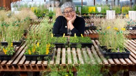 Joanne Chory of the Salk Institute for Biological Studies leans over plants in a greenhouse in this undated photo.