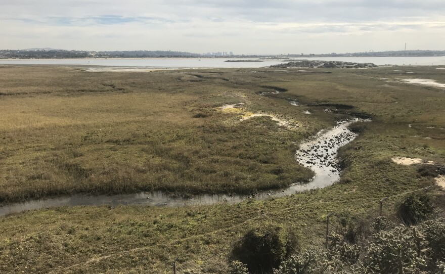 The Kendall Frost Marsh in the northeast part of Mission Bay on Dec. 4, 2018.
