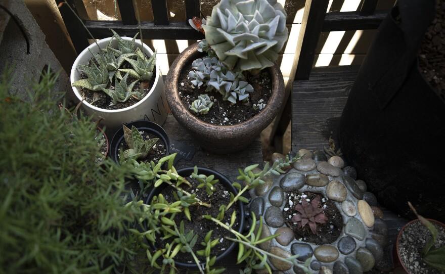 Plants grow in Marine veteran Kiaya Bender's garden at his Vista home, June 25, 2020.