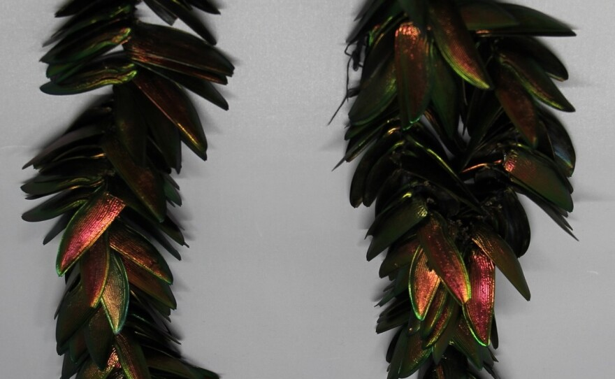 Peruvian insect dance earrings, made of beetle shells and toucan feathers. Made by Alcedes, Aguaruna, Jívaro.