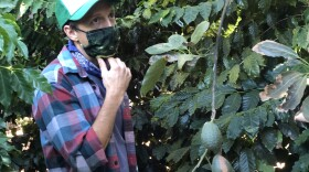Grammy award-winning musician and farmer Jason Mraz stands between his coffee and avocado trees at his Oceanside property, Dec. 22, 2020.