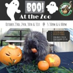 Boo-at-the-zoo-2021.jpg