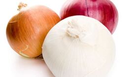 A salmonella outbreak impacting more than 30 states and sickening over 600 people in the U.S. are being linked to onions imported from Chihuahua, Mexico.