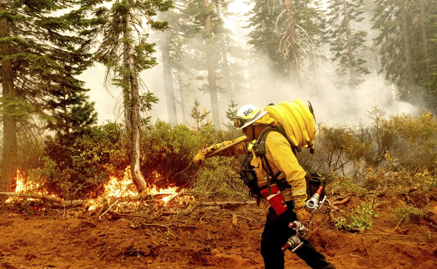 In this Sept. 14, 2020 file photo Cal Fire Battalion Chief Craig Newell carries a hose while battling the North Complex Fire in Plumas National Forest, Calif.