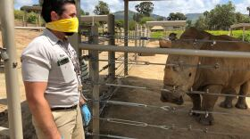 Senior keeper Weston Popichak wears protective gear while caring for rhinos at the San Diego Zoo Safari Park on Apr. 17, 2020.