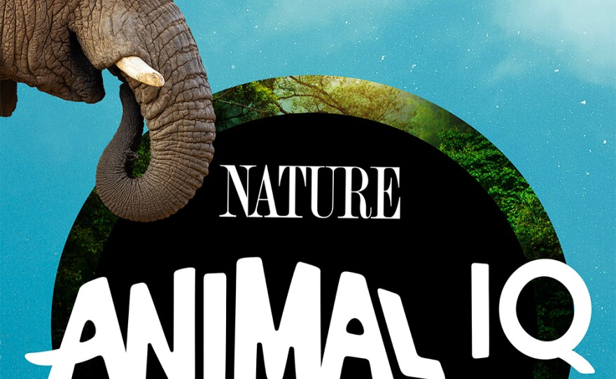 ANIMAL IQ title graphic