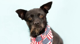 A dog wears a red, white and blue bandana in this undated photo.