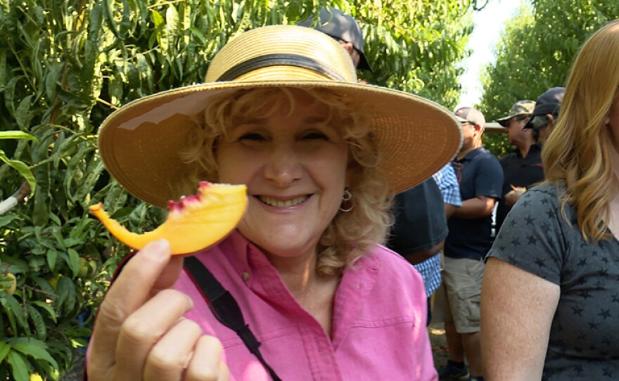 Host Nan Sterman goes on a fruit tasting tour in the experimental orchard of internationally renowned Zaiger Genetics, Modesto, Calif.