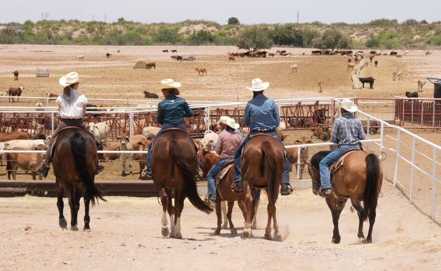 Pati Jinich herding cows.jpg
