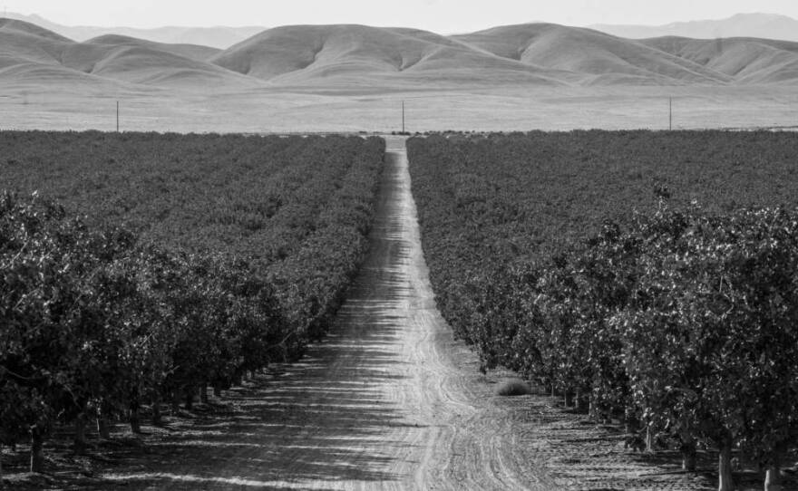 Pistachio orchards marching toward the horizon, owned by America's richest farmers, Lynda and Stewart Resnick, in this undated photo.
