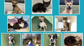 Ten puppies, dogs, kittens and cats currently available for adoption at the County Department of Animal Services are shown in this undated photo.